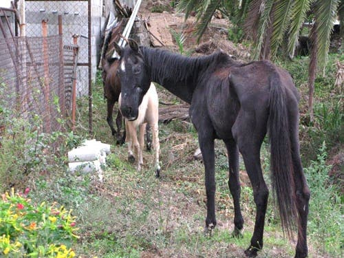 Horse rescue centre in Spain protests against horse cruelty