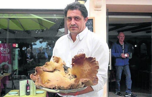 Giant mushroom found in the Serrania de Ronda