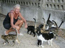 Tortured cats given new home