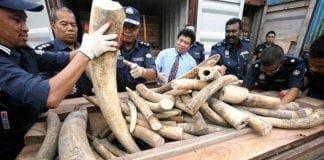 ivory smuggling