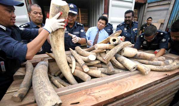 Ivory smugglers using Spain