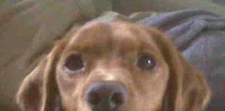 miranda leslau dog nearly killed by fish hook spain