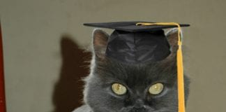 Mouse ters Degree