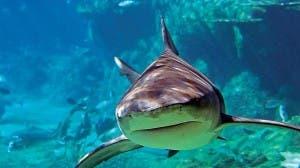 aquarium pic 1