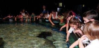 aquarium pic e