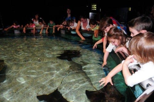 Switch off crisis for biggest aquarium in Spain