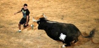 bull death pic e