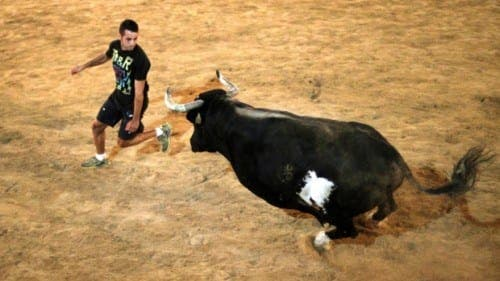 Feared and celebrated bull in Spain has died