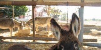 donkey pic e