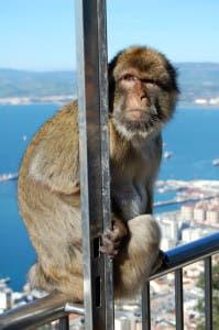 Hey, hey, I'm a monkey, and I like to monkey around