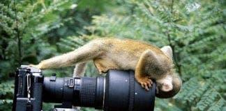 monkeycam pic
