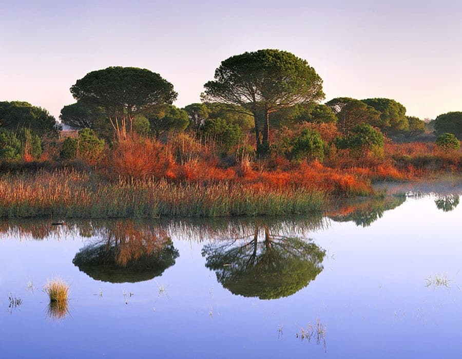 Green hope for Andalucia National Park
