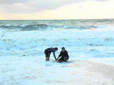 Dolphin rescue in Casares