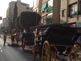 Horse dies in Malaga traffic accident