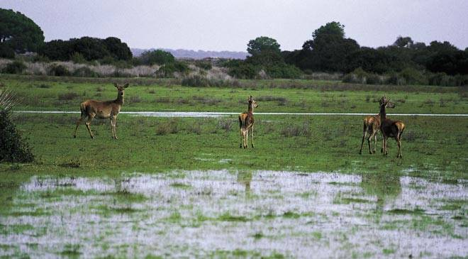 Doñana's UNESCO status in danger