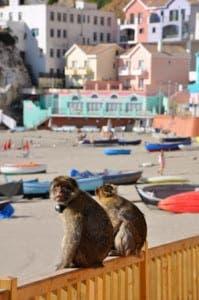 Meet the East Side monkey troupe
