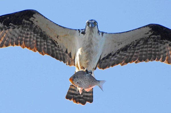 Scottish birds flying in to breed in Spain