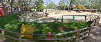 Google zoo view in Spain