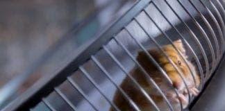 hamster drives volvo truck
