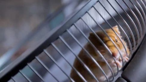 VIDEO: Hamster 'drives' a truck in Spain