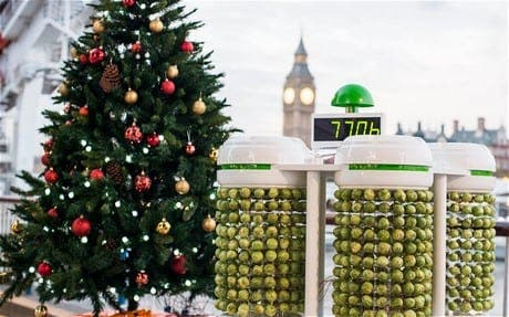 Light your Christmas tree with Brussels sprouts power