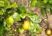 Business Citrus