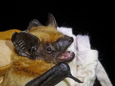 Bat lands in Gibraltar for first time