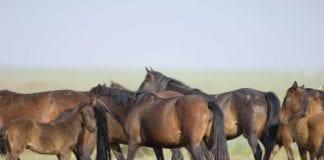 wild horses e