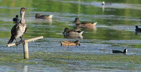Granada is top spot for birds' winter break