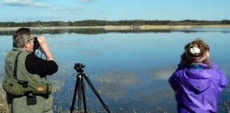 birdwatching e