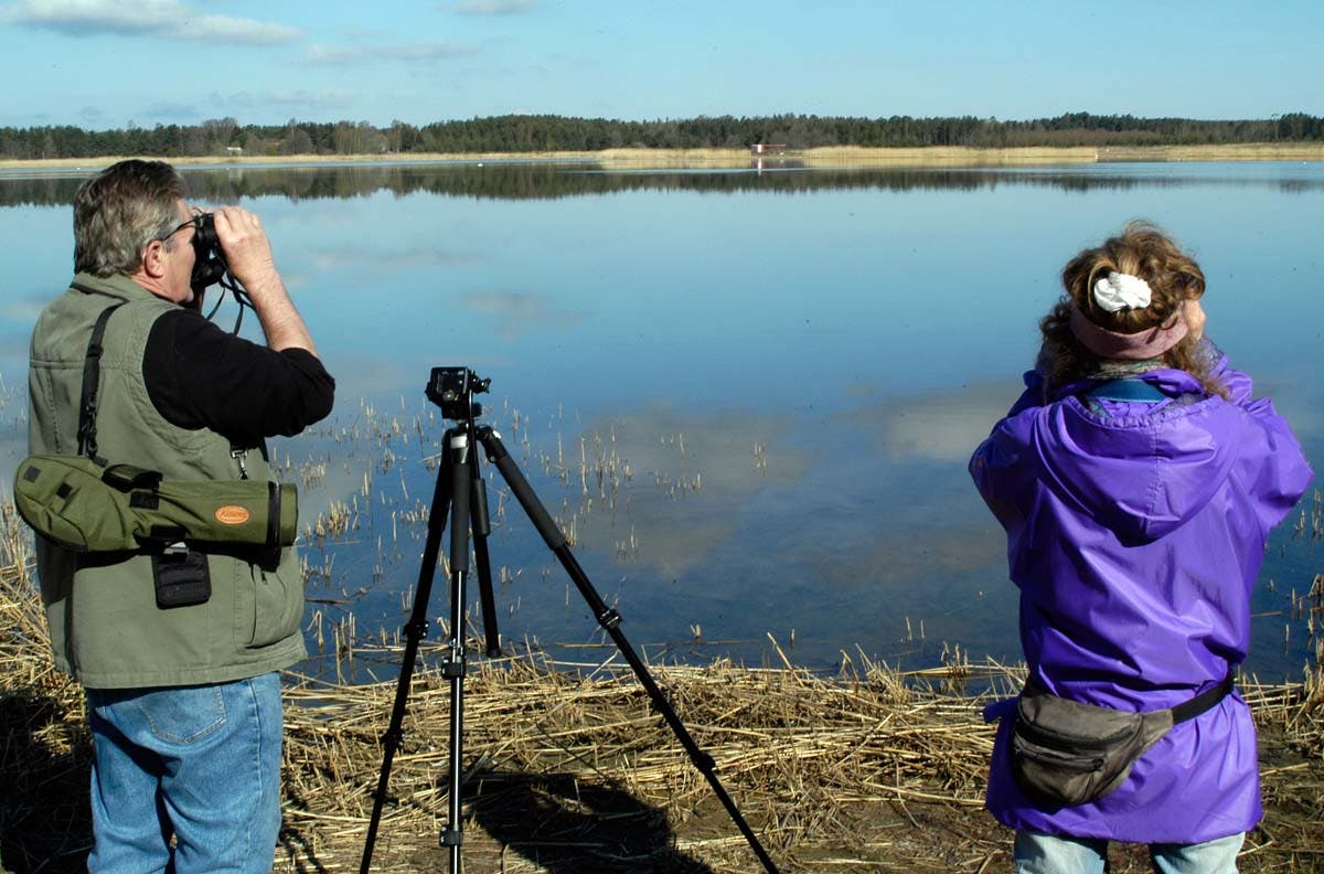 Twitchers are all of a flutter over new bird-watching app