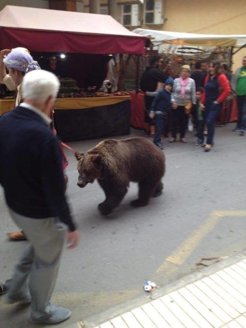 Dancing bear spotted at Murcia medieval market