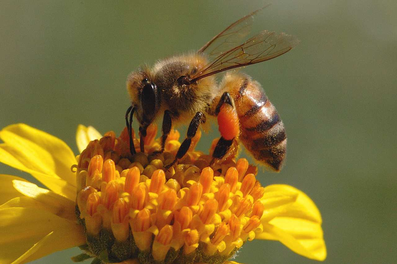 Spanish bees have one of the lowest mortality rates in Europe
