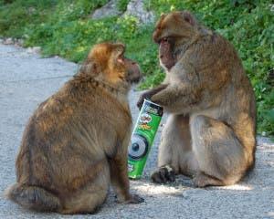 belinda pringles monkey