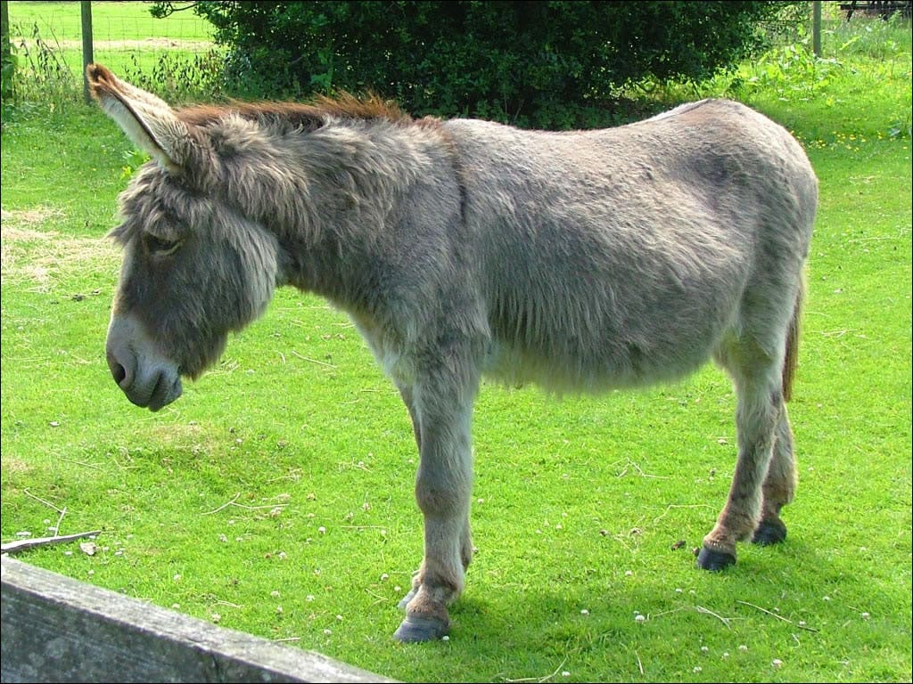 Donkey D-Day: Popular sanctuary to close after 10 years
