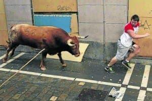Muria bull (WARNING-GROSS)