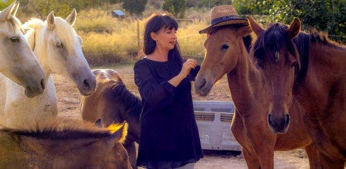Expat family and horse-whisperer rescue neglected horses in Murcia