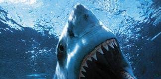 shark e