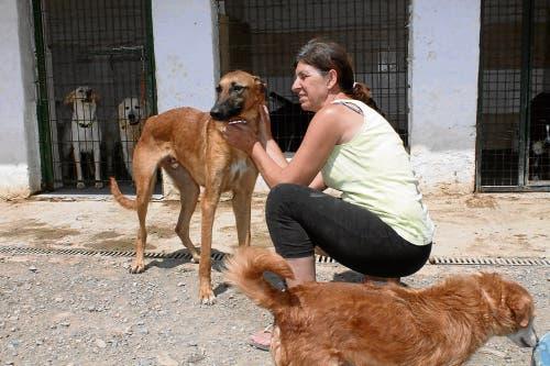 Animal rescue crisis