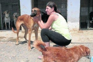 Kim currently has 80 dogs and 117 cats at her centre