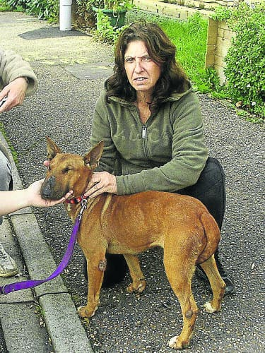 Animal rescue centre is 'out of control', admits owner