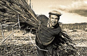 Sugar cane man old