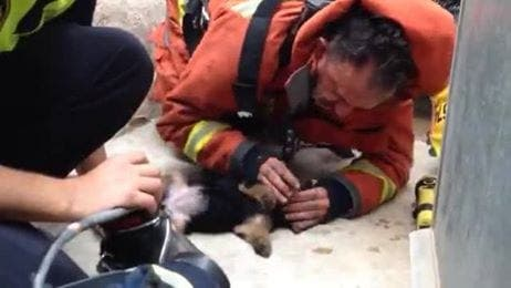 VIDEO: Spanish fireman saves puppy with mouth-to-mouth resuscitation