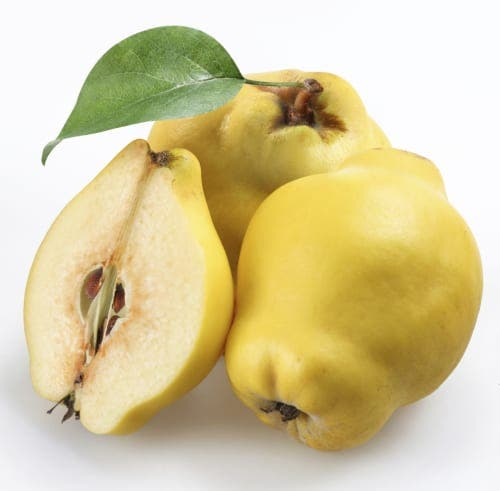 Quince: The bittersweet fruit
