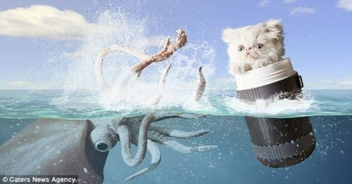 Cameraman creates surreal pictures of his cat
