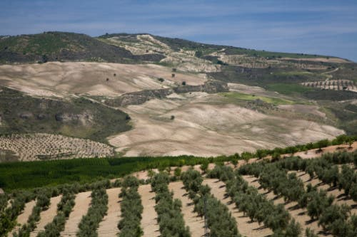 Plans to be unveiled to keep Andalucia at the head of agricultural development