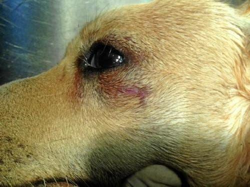 Spanish man beats elderly neighbour's dog to death in Almeria