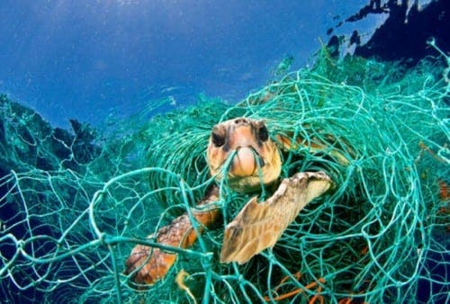 Turtles get 'the bends' because of commercial fishing practices