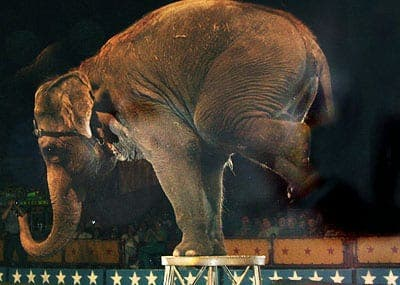 Expat campaign to ban animal circus in Manilva and Casares
