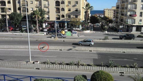 Dog causes traffic mayhem in Sabinillas